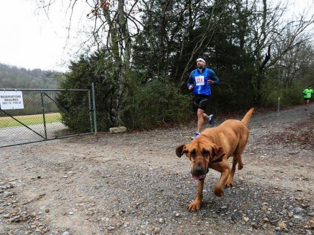 marathong-dog-3.jpg