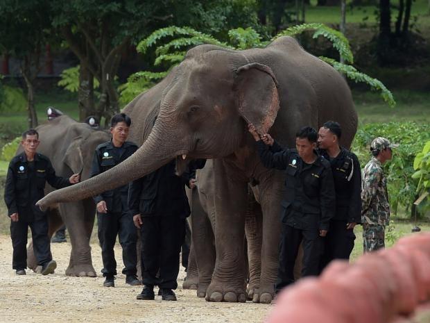 thailand-elephant.jpg