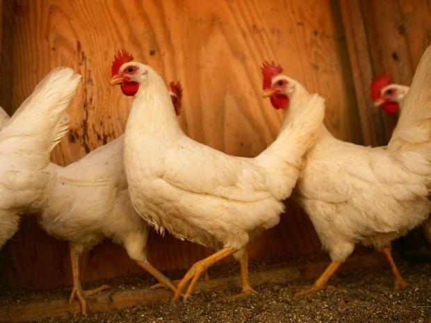 biz-52-Chicken.jpg