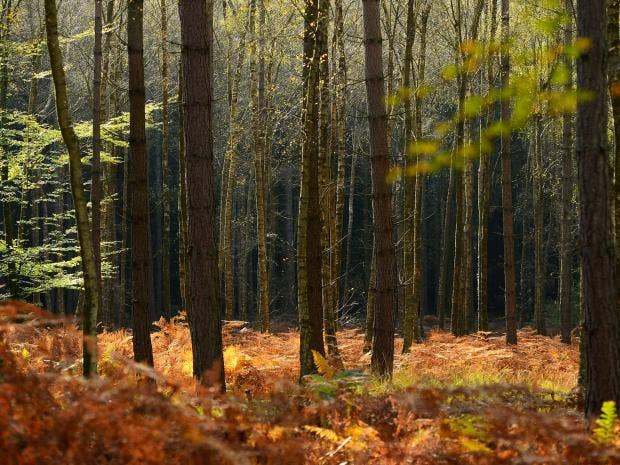 New-Forest-Getty.jpg