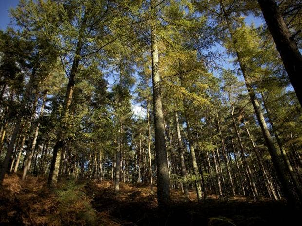 23-woodland-get.jpg