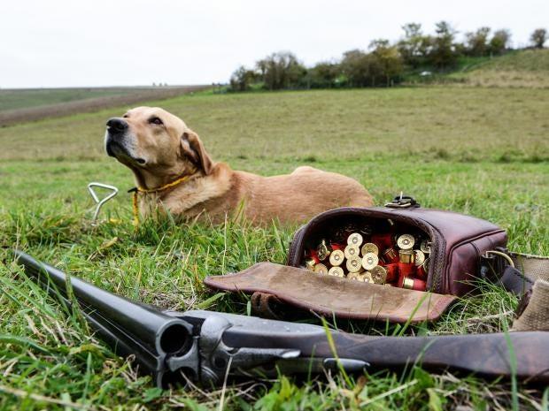 14-dog-hunting-get.jpg