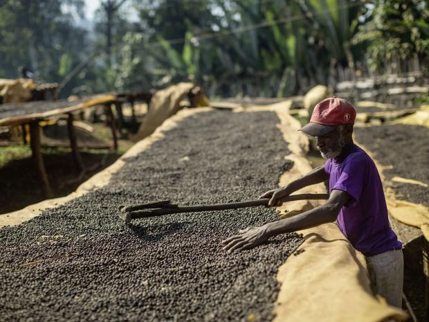 Ethiopian-Coffee-Chris-Terry.jpg