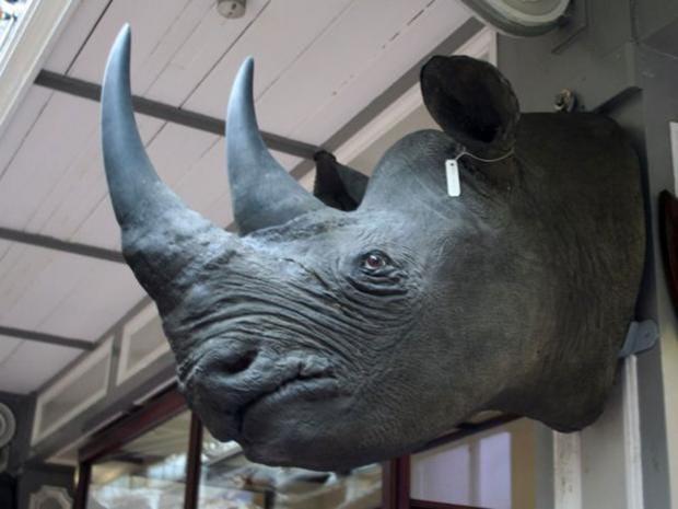 web-rhino-head-pa.jpg