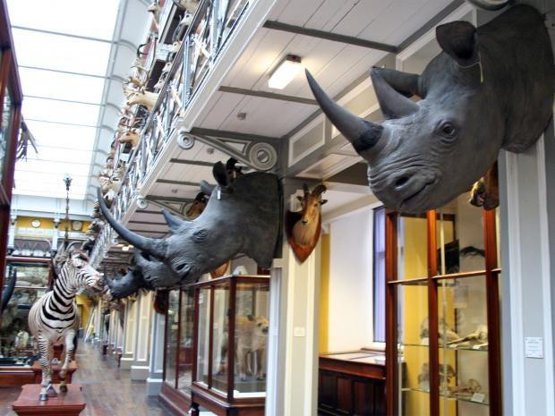 pg-18-musuem-rhino-head-pa.jpg