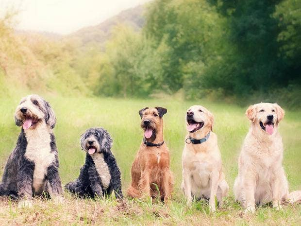 dogs-istock.jpg