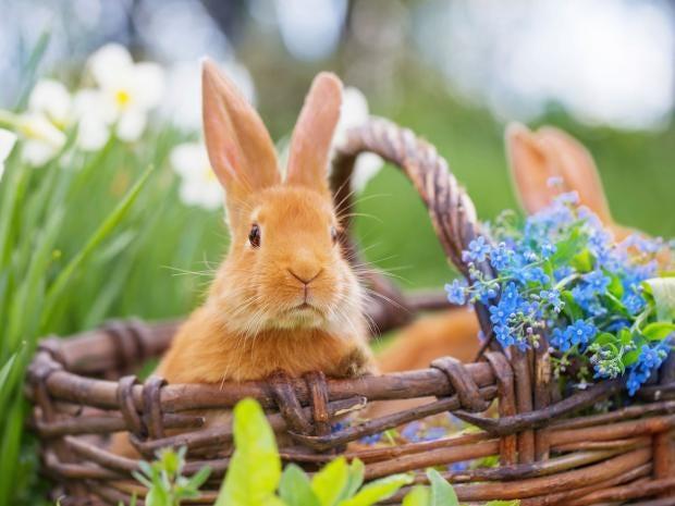 bunny-istock.jpg