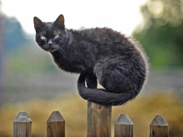 pg-14-cat-parasites-1-getty.jpg