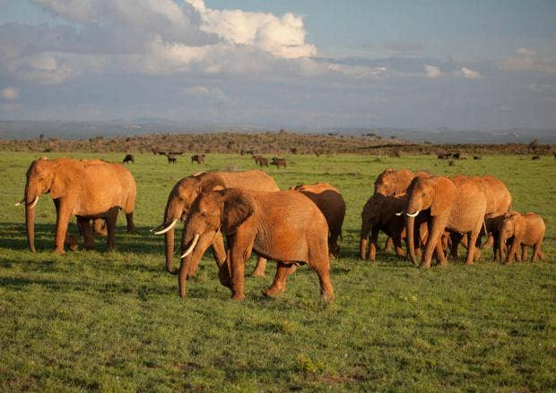 Kenya calls for end to ivory trade