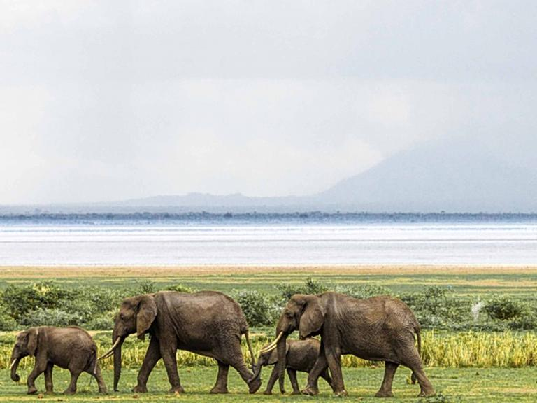 Elephant slaughter continues, but so does hope