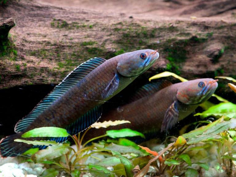 Sneezing monkeys and walking fish among 200 new Himalayan species discovered