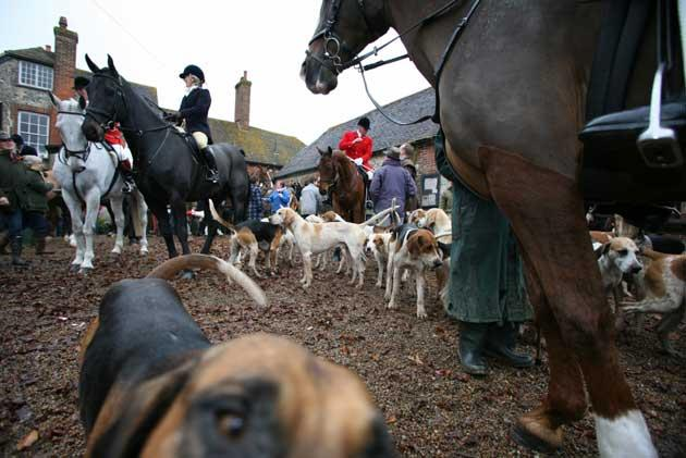 No foxes were killed at the meet of the Southdown and Eridge Hunt in Firle, East Sussex