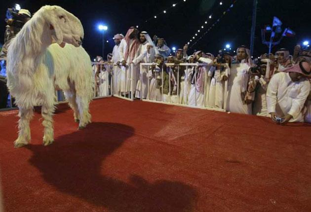 Smile, bleatie! Admirers gather round the winning Najdi goat after last week's contest in Saudi Arabia