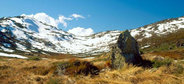 Habitats in the Snowy Mountains in New South Wales are at risk from rising global temperatures