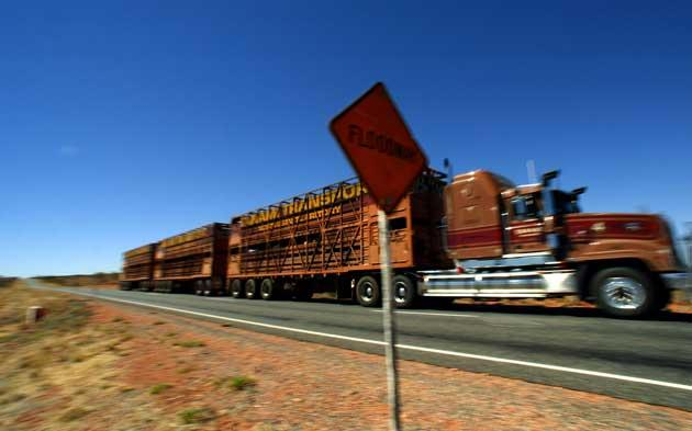A 'road train' carrying cattle thunders through the Outback
