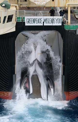 Two minke whales are dragged aboard a Japanese whaling ship
