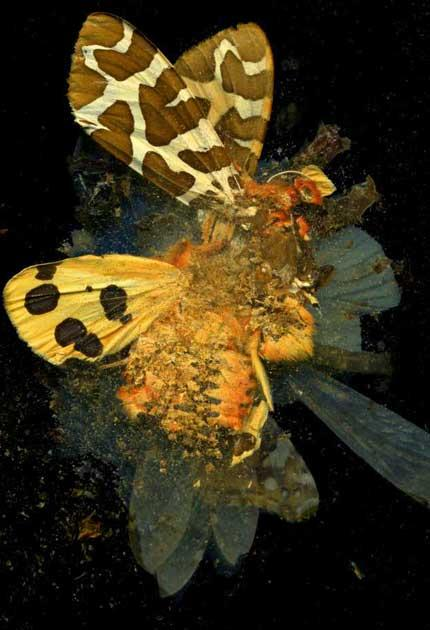 Brilliant colour: Mat Collishaw's 'Insecticide'