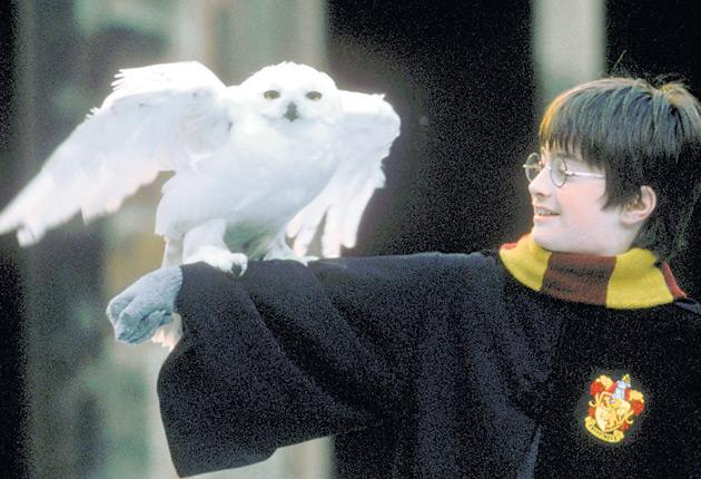 Daniel Radcliffe as Harry Potter with Hedwig the owl in Harry Potter and Philosopher's Stone