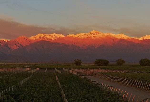 The snow-capped Andes look down on the new prosperity of Mendoza, foreign owned vineyards producing wines that will put Argentina in the front rank of vintages