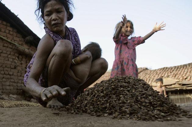 Tribal women drying fruits to make liquor