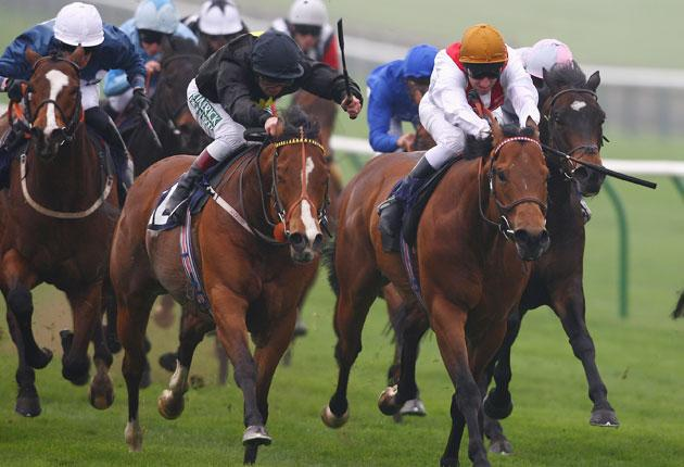 Tax Free, who won at Chantilly yesterday and is one of the leading British hopes for this month's King's Stand Stakes at Royal Ascot