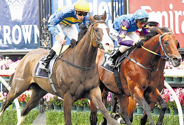 The Australian sensation Scenic Blast (left), pictured winning at Flemington in March, is likely to be a genuine rival to the home hopefuls at Ascot