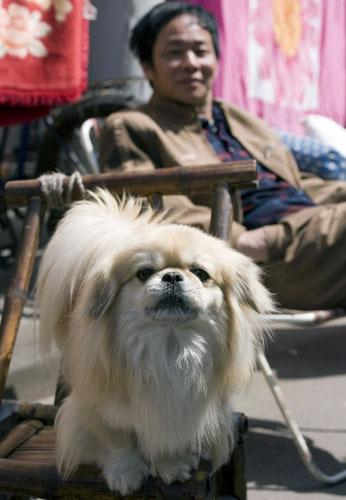 Pet owners in some parts of China are allowed to keep only one dog under a new law may force thousands of dogs to be destroyed