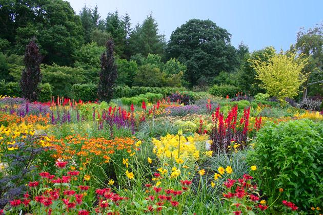 Bright spot: drifts of reds and yellows and spots of mauve give Rosemoor's Square Garden a real wow factor