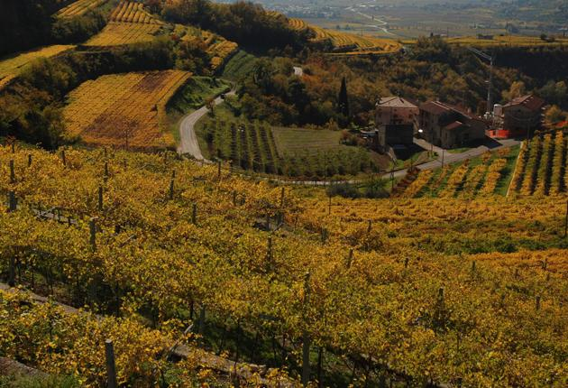 There are fears that the rubbish of Naples could end up in the idyllic Valpolicella region (pictured), home to 20 generations of Dante's heirs