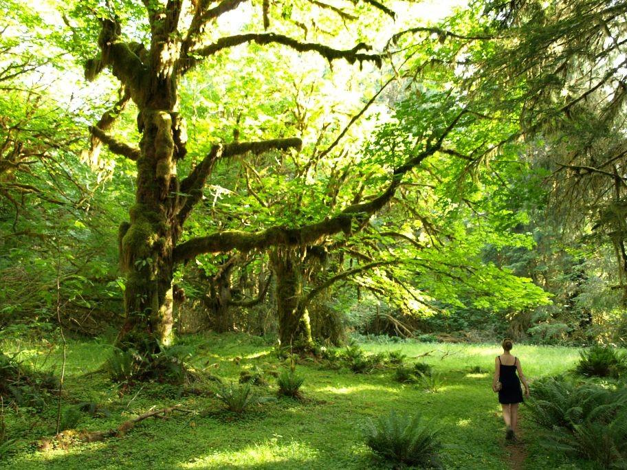 Leafy haven: The Olympic National Park in Washington state