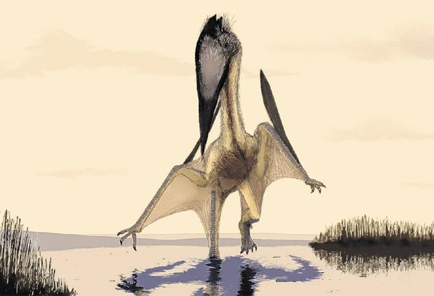 An artist's impression of a pterosaur, which walked the earth - using its wings as a pair of front legs - approximately 140 million years ago