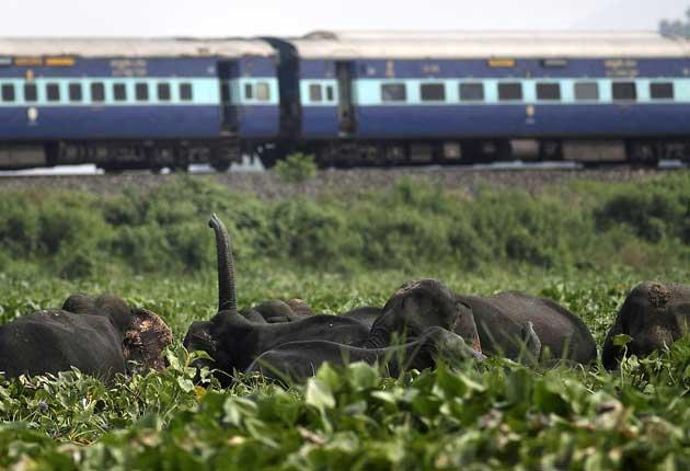 Indian Railways is by a wide margin the biggest transport provider in the world