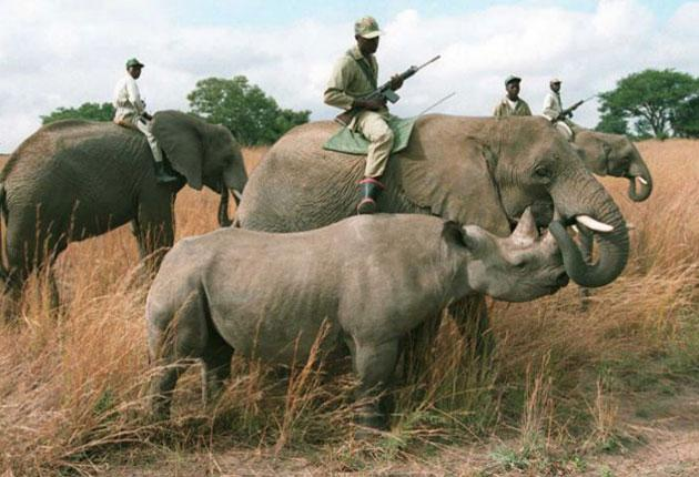 Armedrangers protect black rhinos at the Imire Safari Ranch outside Harare; such ranches are now at risk