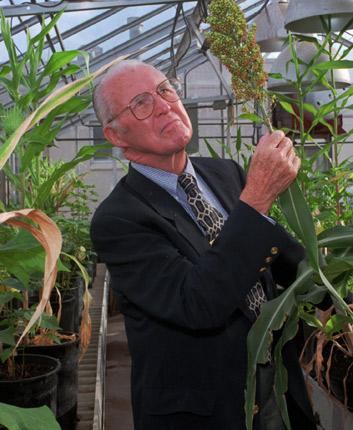 Professor Norman Borlaug inspects sorghum tests at Texas A&M University in 1996