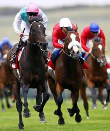 Twice Over (left) is now a possible for the Breeders' Cup