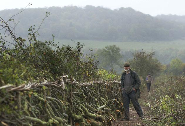 The 31st National Hedgelaying Championships attracted more than 100 competitors