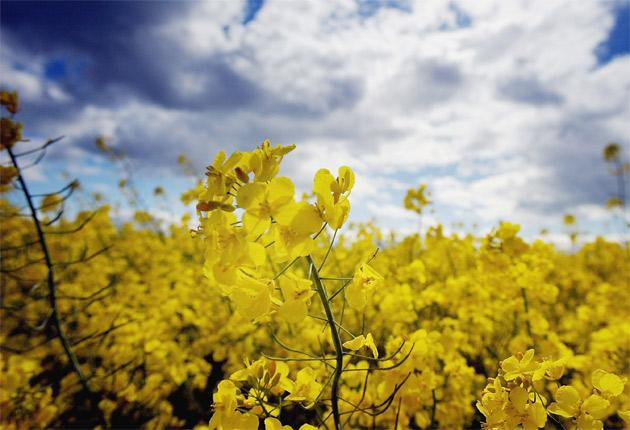 The pubic is concerned about the threat to bio-diversity posed by GM crops