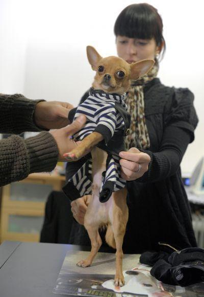 Celine Boulud, fashion designer for dogs