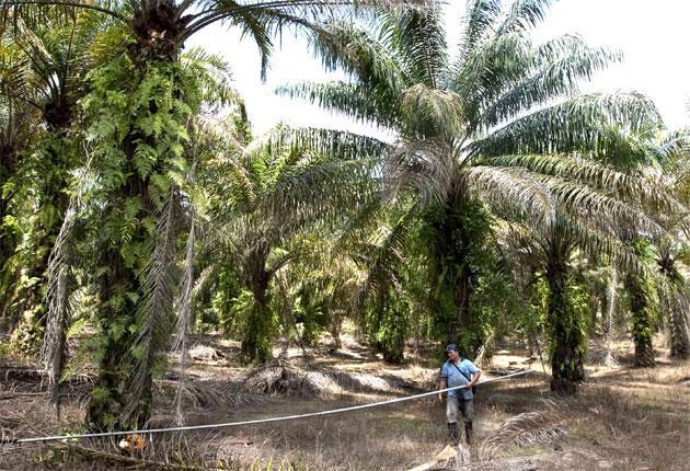 A worker at a palm oil plantation near Kuala Lumpur