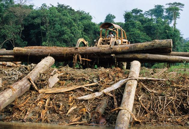 A rainforest is destroyed in Borneo. Indonesia and Malaysia are the biggest producers of palm oil in the world