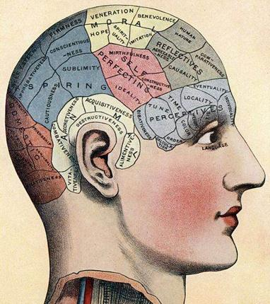 If only it was quite so simple: An antique phrenology chart detailing the purpose of areas of the brain