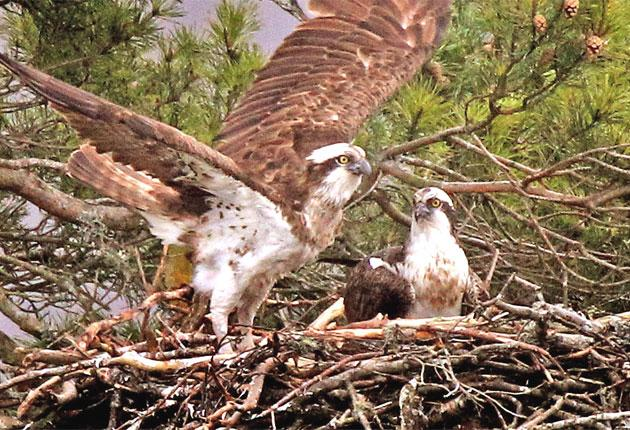 The 25-year-old bird has produced 56 eggs in her lifetime