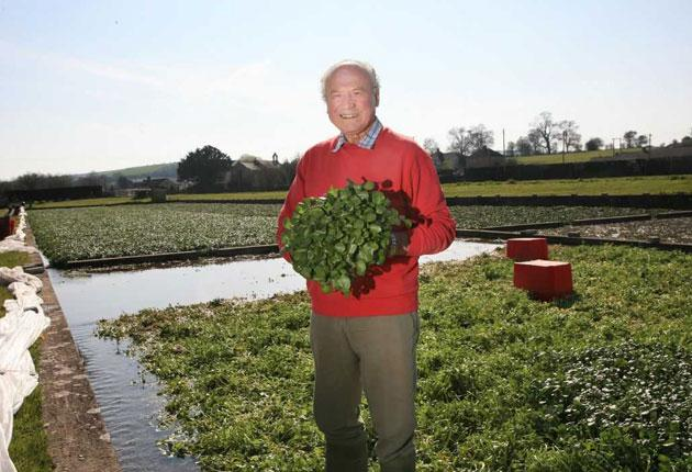 Green and pleasant: John Hurd on his Wiltshire farm, which produces organic watercress, grown in the traditional way and then harvested by hand. The produce is then sold in bunches, complete with the flavoursome stalks