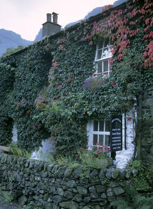 English Heritage wanted to discover the effects of ivy on historic buildings