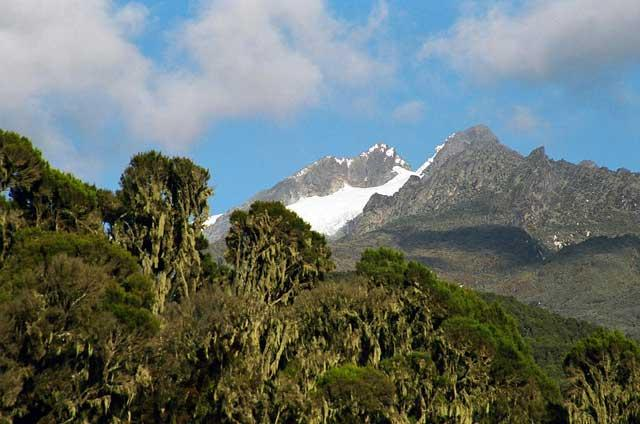 High life: Margherita, climbed by Sue Watt is one of Mount Stanley's two peaks