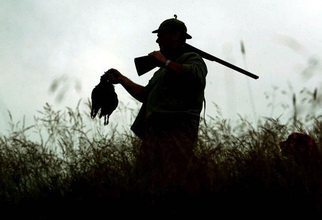 No change: grouse shooting in Eddleston, Scotland