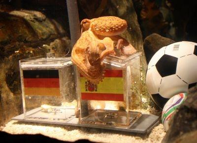 The octopus named Paul sits on a box decorated with a Spanish flag