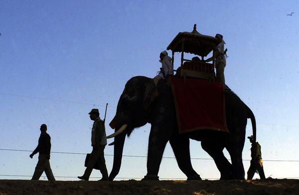 Animal magic: a mahout and his elephant