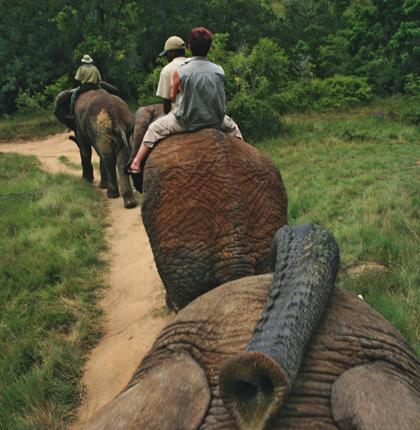 Trunk road: A bareback elephant ride is among the highlights at one park near Port Elizabeth