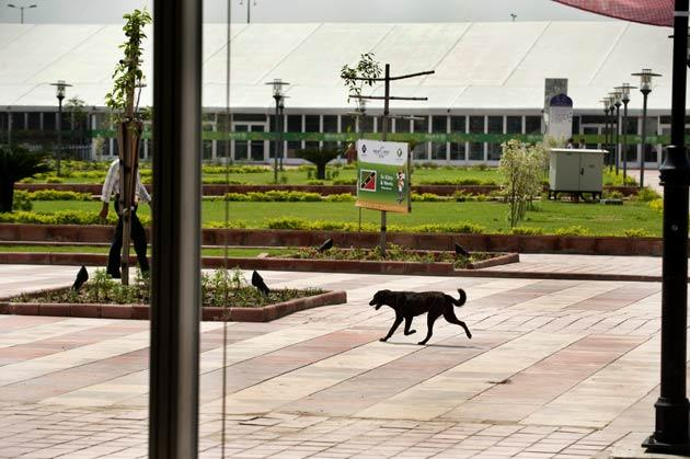 Stray dogs are an issue in the Olympic Village